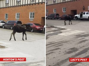 This was a photo that both Eddie Lacy and Tony Horton posted on their social media. It is of a Moose running across the street in Wyoming....